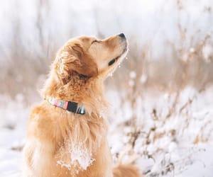 adorable, christmas, and dogs image