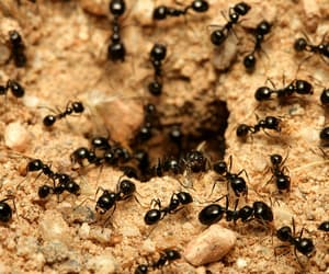 ants, pest control, and services image