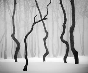 black and white, czech, and snow image