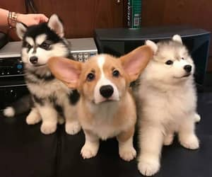 dog, pets, and cute image