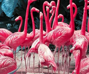 background, flamingos, and new rules image