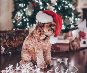 christmas, christmas tree, and dog image