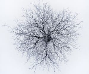 Dron photography is amazing. Look at this tree in winter // @night_wishes