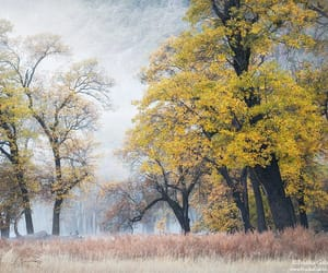 Misty morning by Franka Mlikota Gabler