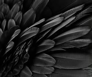 black, aesthetic, and feather image