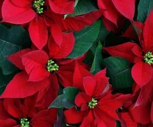 belleza, christmas, and naturaleza image