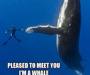 awesome, funny, and ocean image