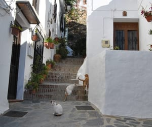 calle, escalera, and photography image