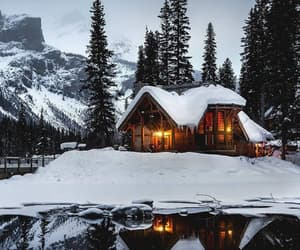 christmas, snow, and forest image