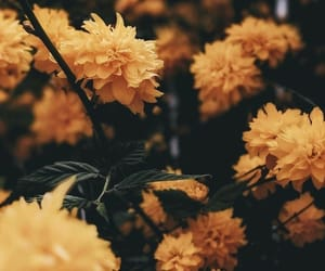 Yellow flowers|Background