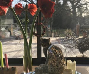 cats, pussy cats, and flowers image
