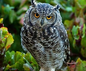 owls, owl lover, and owl collection image