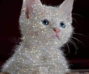 cat, aesthetic, and diamond image