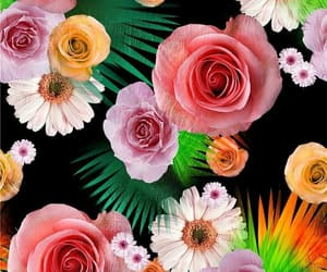 background, daisies, and floral image