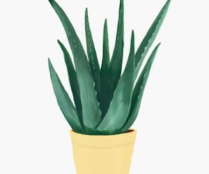 art, artwork, and cactus image
