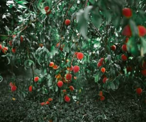 explore, fruit, and green image
