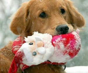 dog, snow, and christmas image