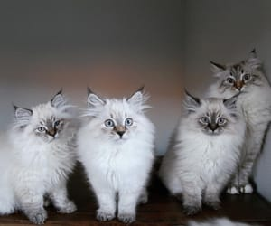 cats, eyes, and kittens image