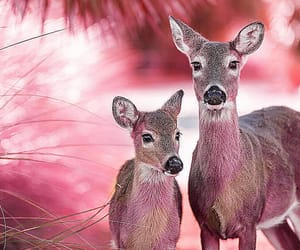 animals, beautiful, and shimmering image