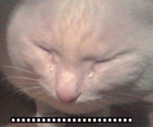cat, sad, and cry image