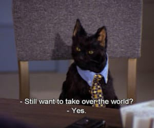 cats, salem, and funny image