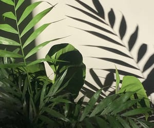 aesthetic, fern, and photography image