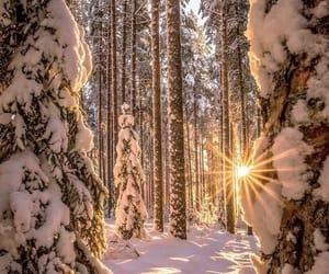 daylight, snow, and tree image