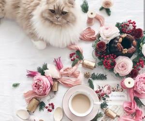 cappuccino, christmas, and girls image
