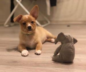 cute dog and dog image