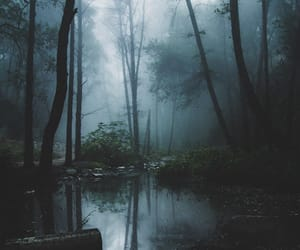 dark, forest, and mist image