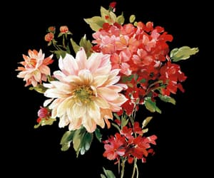 flowers, bouquet of flowers, and flowers png image