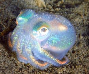 aesthetic, aquatic, and cuttlefish image