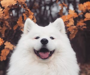 @mayapolarbear When your dog is more photogenic than you'll ever be 🍁🍂