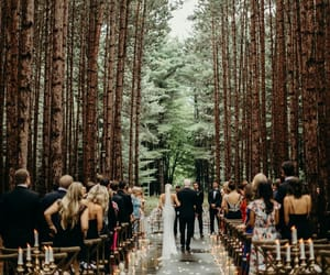 wedding, bride, and forest image