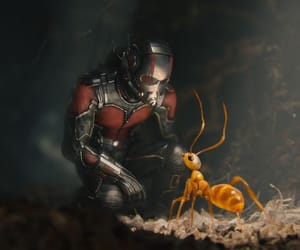 Marvel, antman, and ant man image