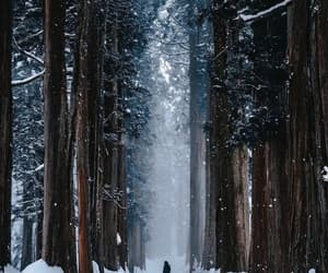 christmas, forest, and nature image