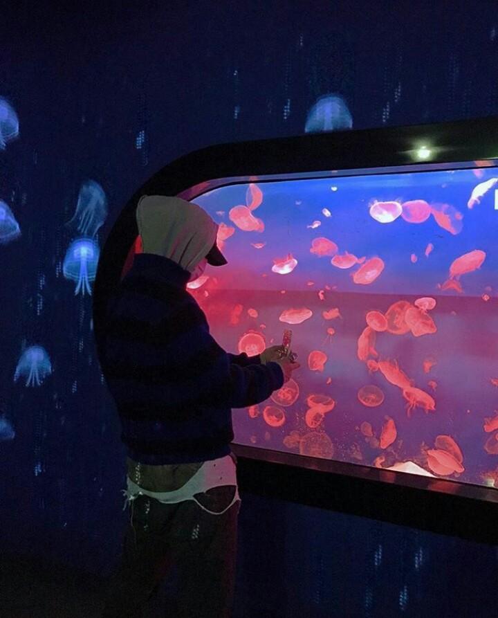 dean, deantrbl, and aquarium image