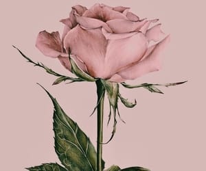 rose, wallpaper, and pink image