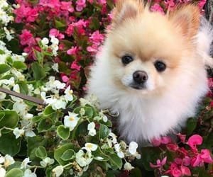 Animales, lindo, and perro image