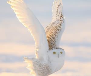 beautiful, bird, and nature image
