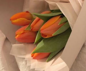 flowers, aesthetic, and orange image