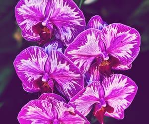 flor, purple flower, and coleccion image