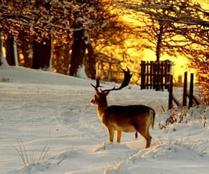 deer, winter, and dreamy image