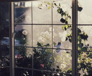 flowers, window, and nature image