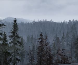 cloudy, fallout, and forest image