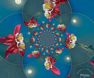 flower, creative, and fractal image