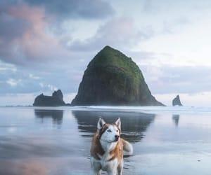 cielo, husky, and océano image