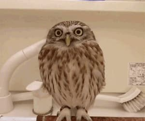 Funny Owl 🦉💕 Gif