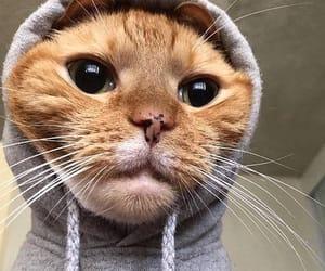 Cat 🐈