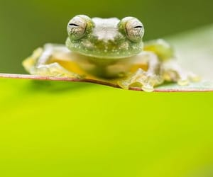 animals, frogs, and amphibians image